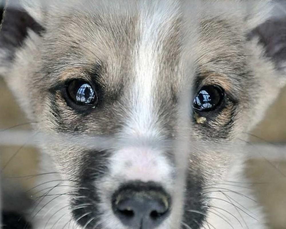 Рада утвердила законопроект о жестоком обращении с животными