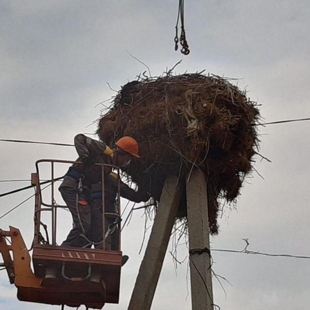 Энергетики установили безопасные платформы для гнездования  аистов