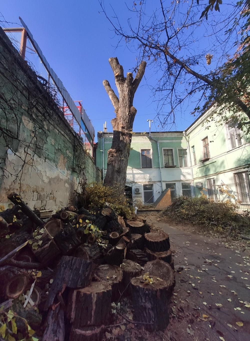 В Одессе уничтожили ботанический памятник природы – самый большой канадский тополь Украины