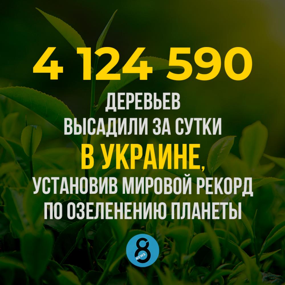 4 млн деревьев  высадили за сутки в Украине,  установив мировой рекорд  по озеленению планеты