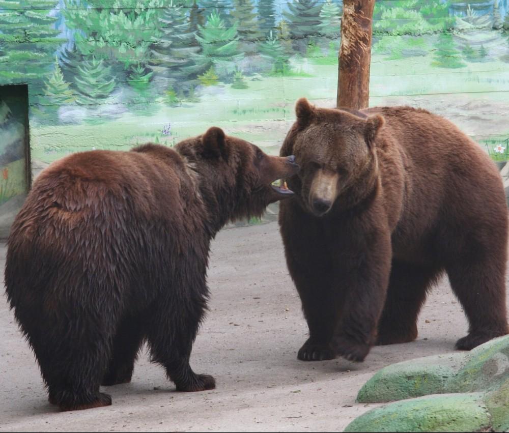 Пара года // В Одесском зоопарке выбрали победителей конкурса