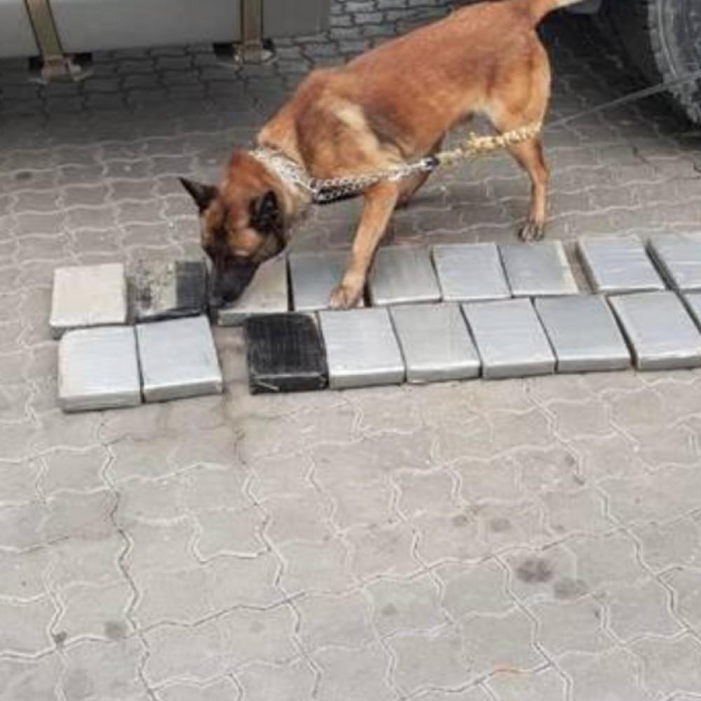 В порту «Южный» таможенники нашли 20 килограммов кокаина