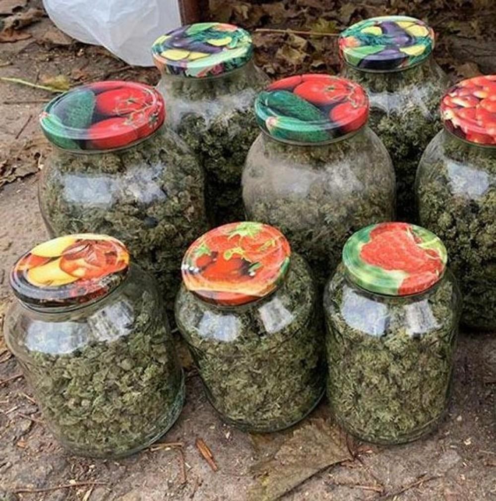 У наркодилеров изъяли марихуаны на миллион гривен