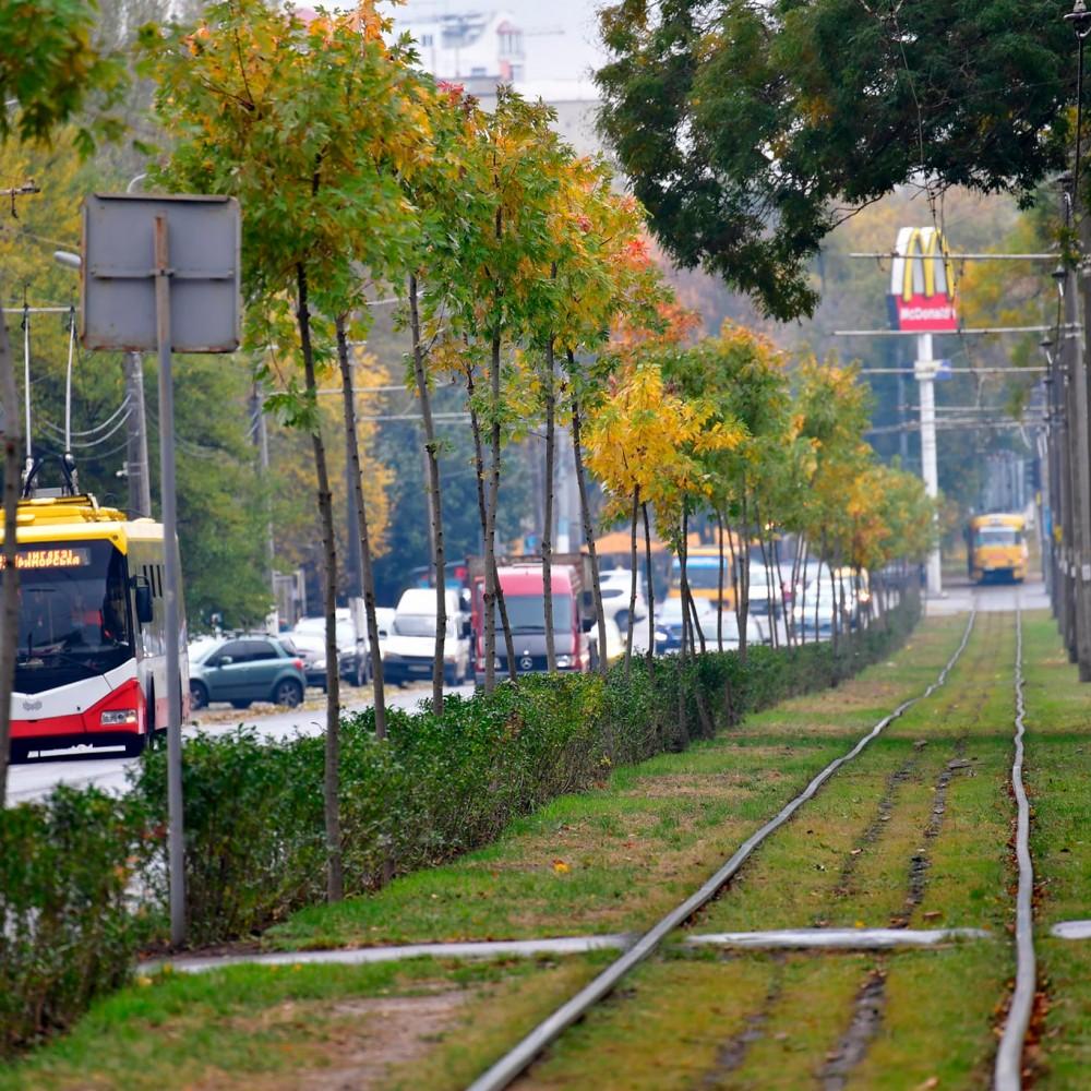 В Одессе появился зелёный тоннель из 133 деревьев