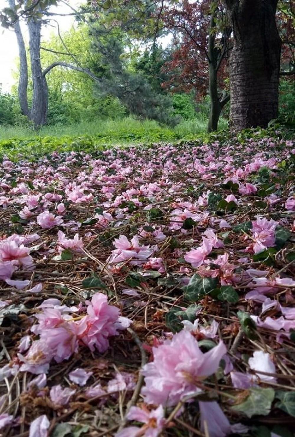 Пали жертвой посетителей // Одесситы вытоптали и оборвали уникальные растения в ботсаду