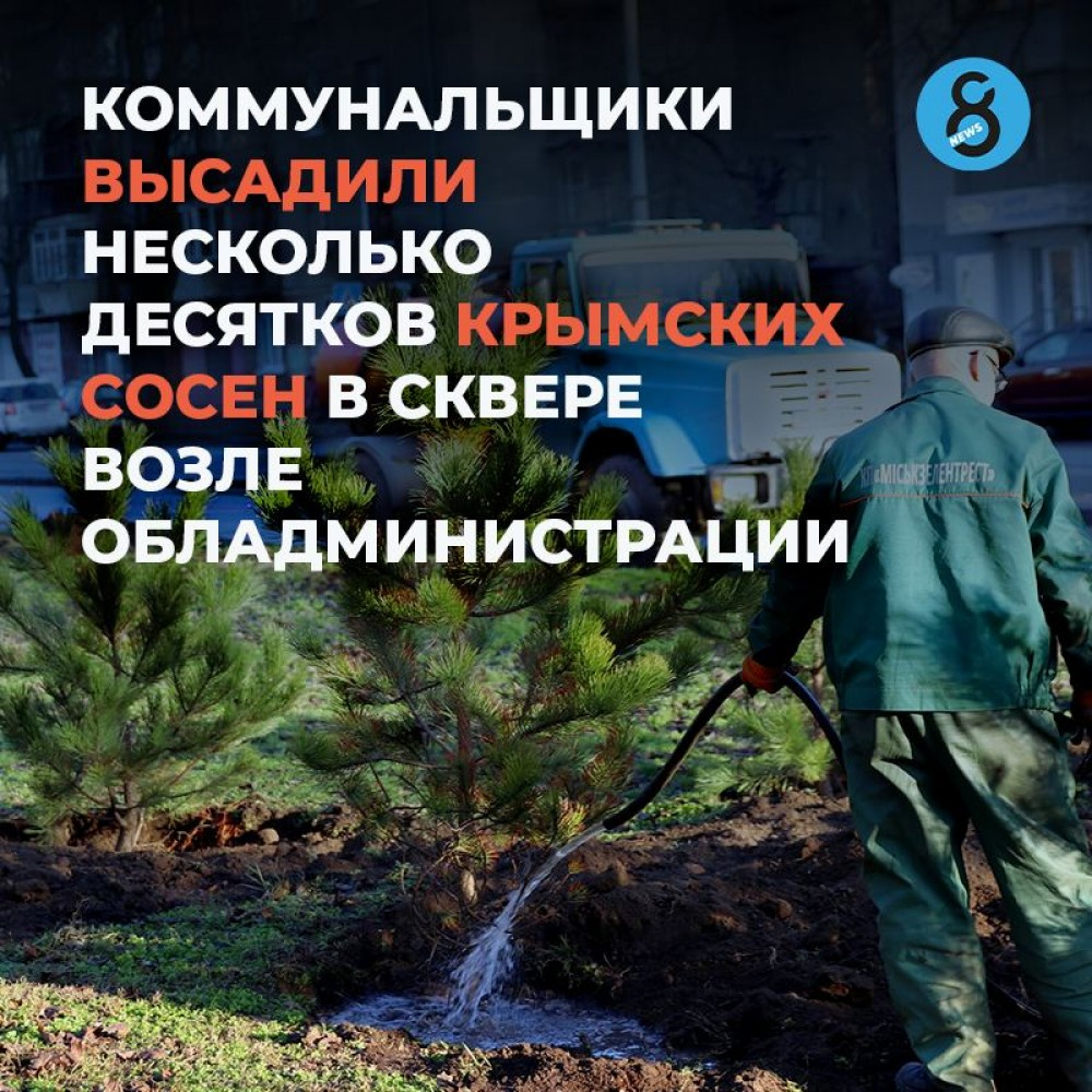 В сквере возле обладминистрации высадили несколько десятков крымских сосен