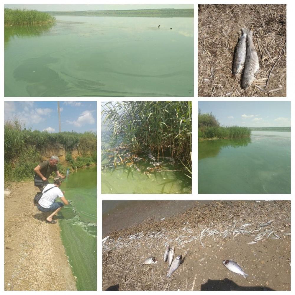 В Хаджибейском лимане мор рыбы // Винят природные факторы