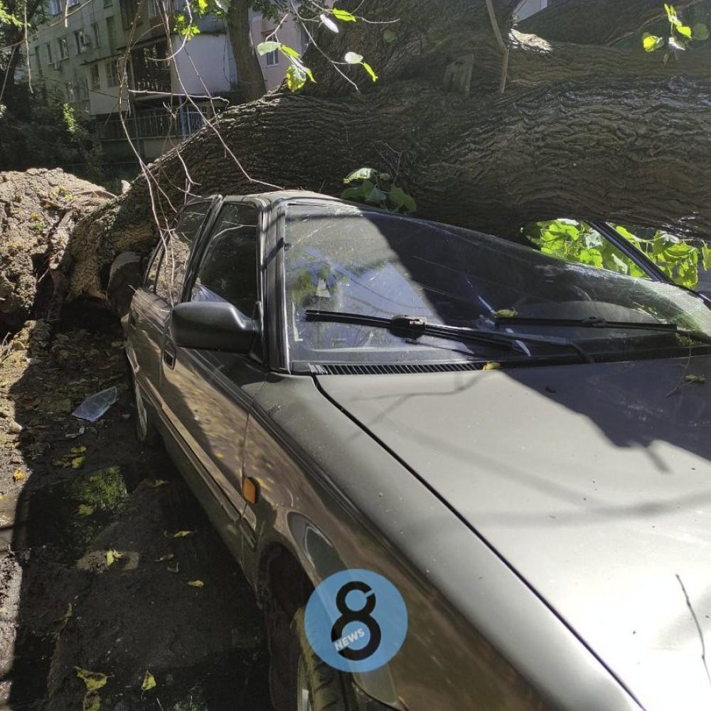Рухнувшее на Черемушках дерево повредило две машины // Люди не пострадали