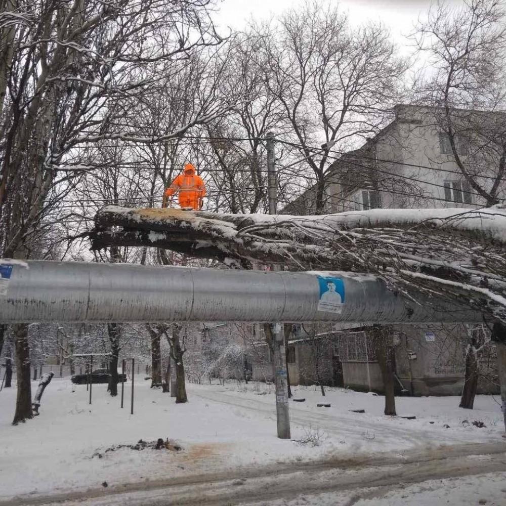 Поваленные деревья //Обесточенные села // Последствия непогоды в Одессе и области (ОБНОВЛЕНО)