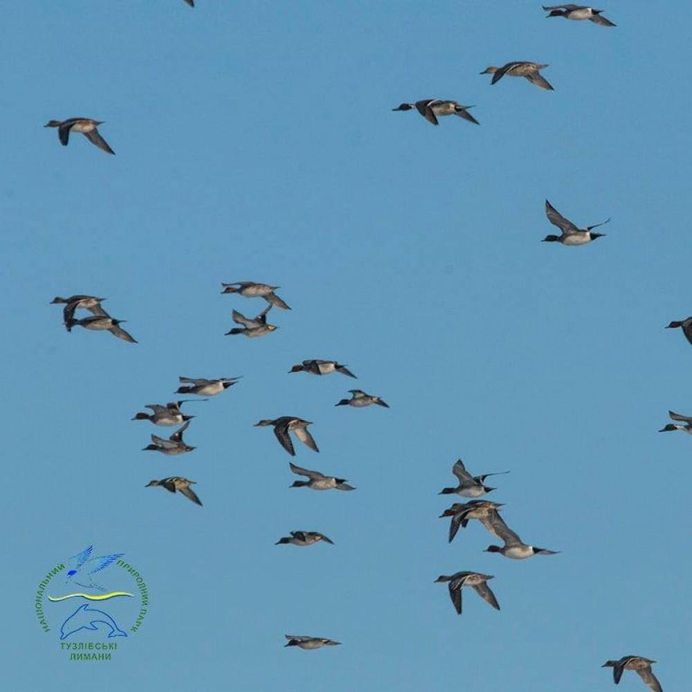 Невероятное зрелище // Началась массовая миграция птиц в Одесской области