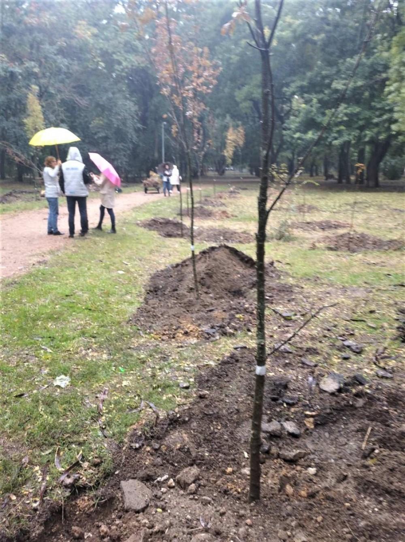 В Преображенском парке высадили полсотни деревьев
