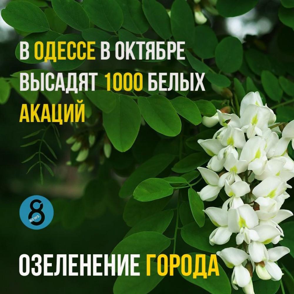 В Одессе высадят 1000 акаций // Коммунальщики готовят лунки на Екатерининской