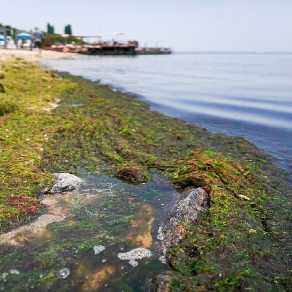 Одесское побережье заполонили гниющие водоросли