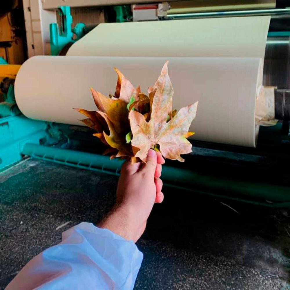 В Украине произвели первую промышленную партию бумаги из опавшей листвы🍁