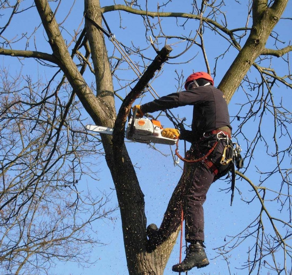 На Екатерининской собираются обрезать деревья // В мэрии просят не оставлять машины на обочине
