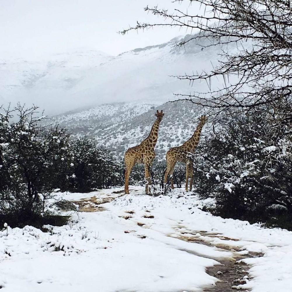 На юге Африки ударили рекордные морозы и выпал снег