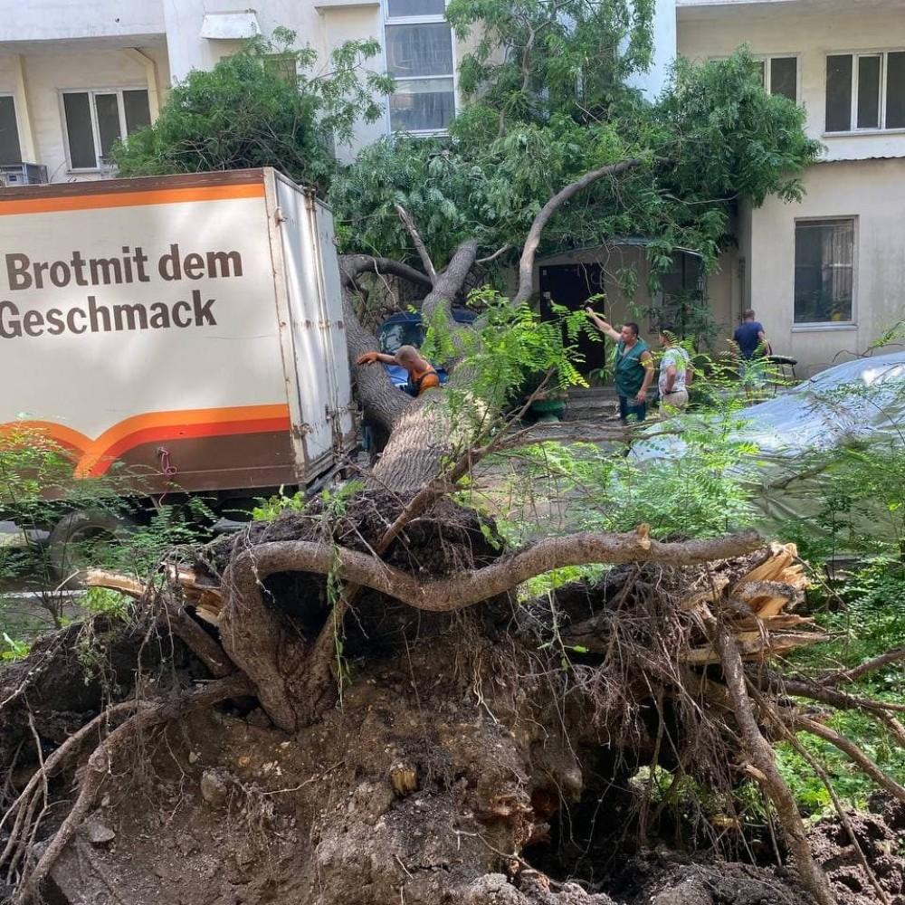 На Пантелеймоновской упавшее дерево повредило микроавтобус