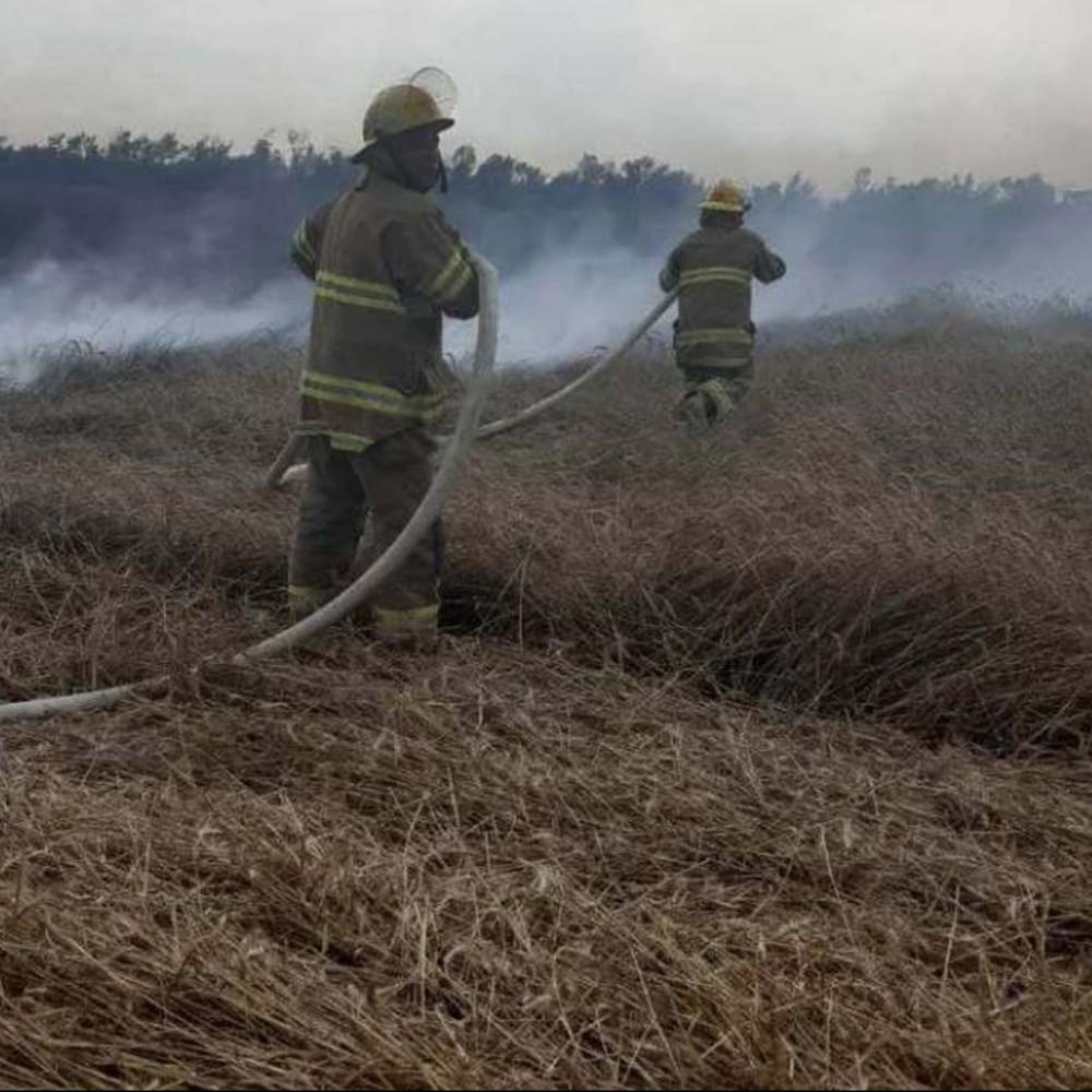 Ударила молния // В Одесской области тушили  пшеничное поле