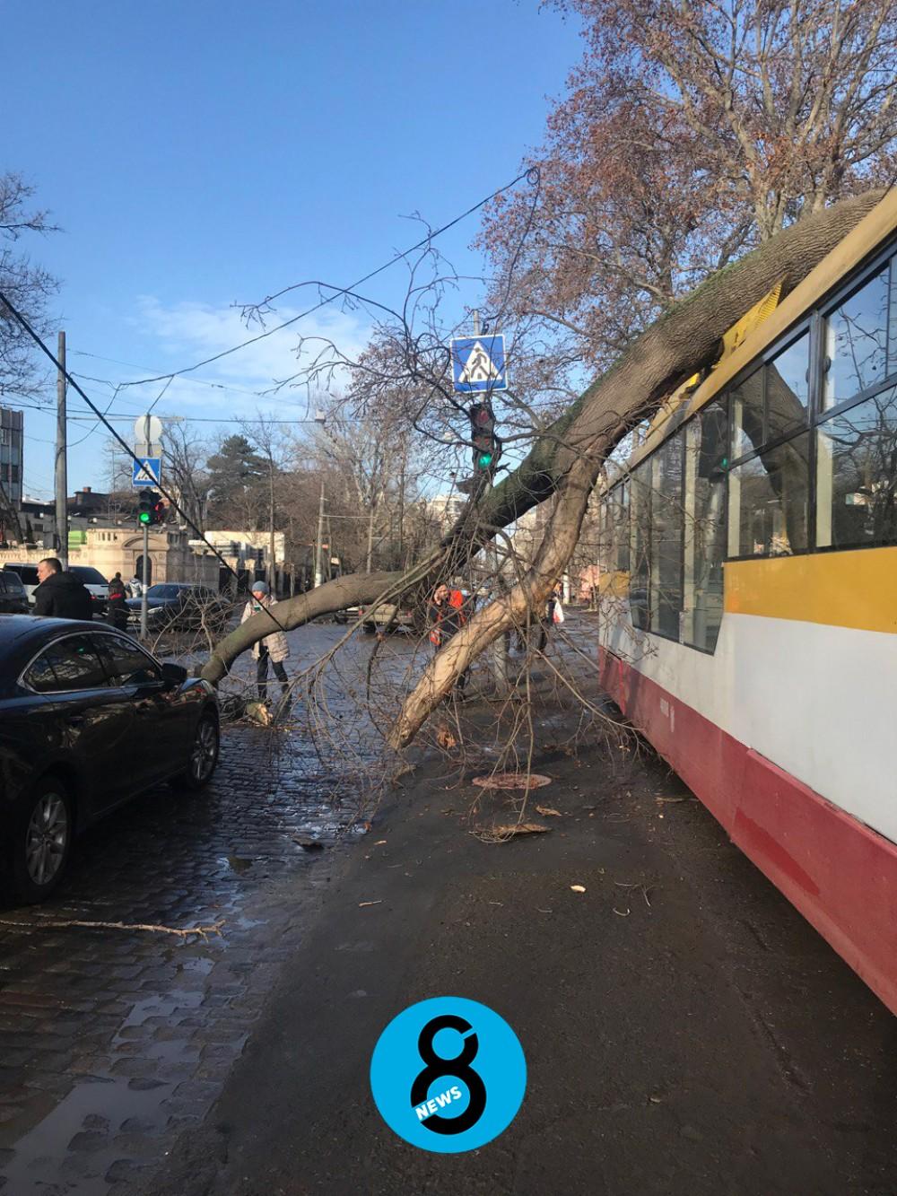 На Французском бульваре дерево рухнуло на трамвай с пассажирами
