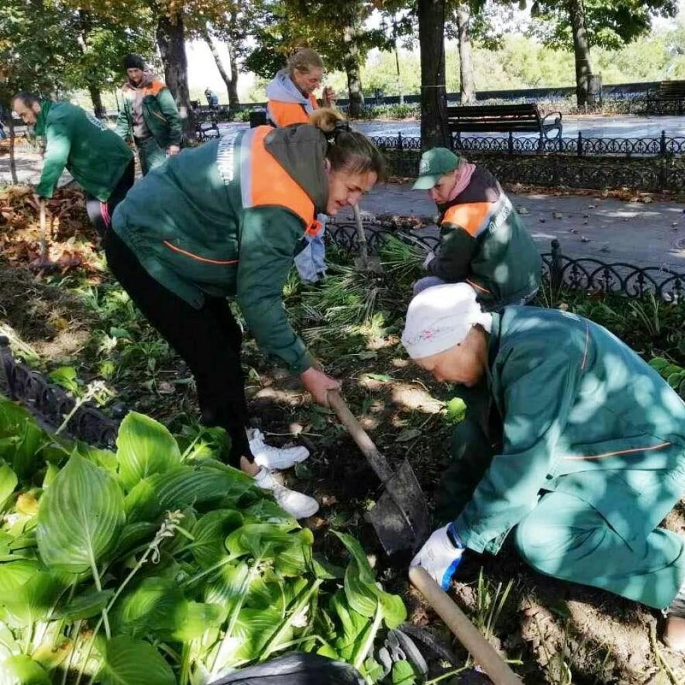 На Приморском бульваре коммунальщики высаживают 10 тыс кустов хосты