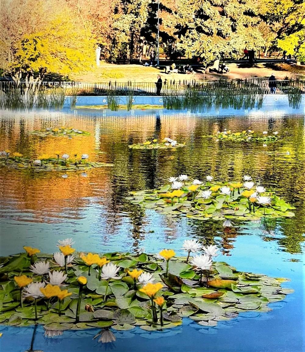 Будет красиво // Пруды парка Победы засадили водяными лилиями