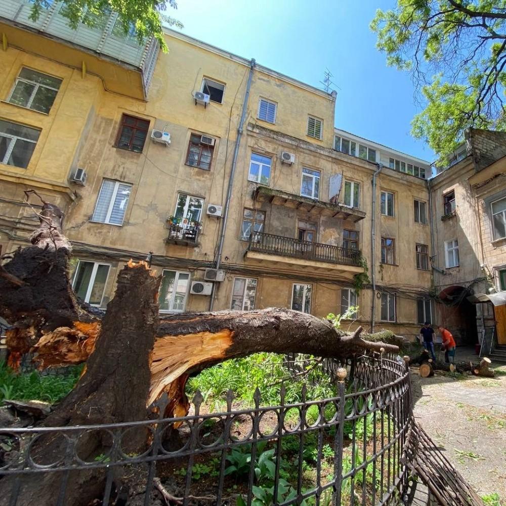 Во дворе в центре Одессы рухнуло огромное дерево // Пострадал балкон