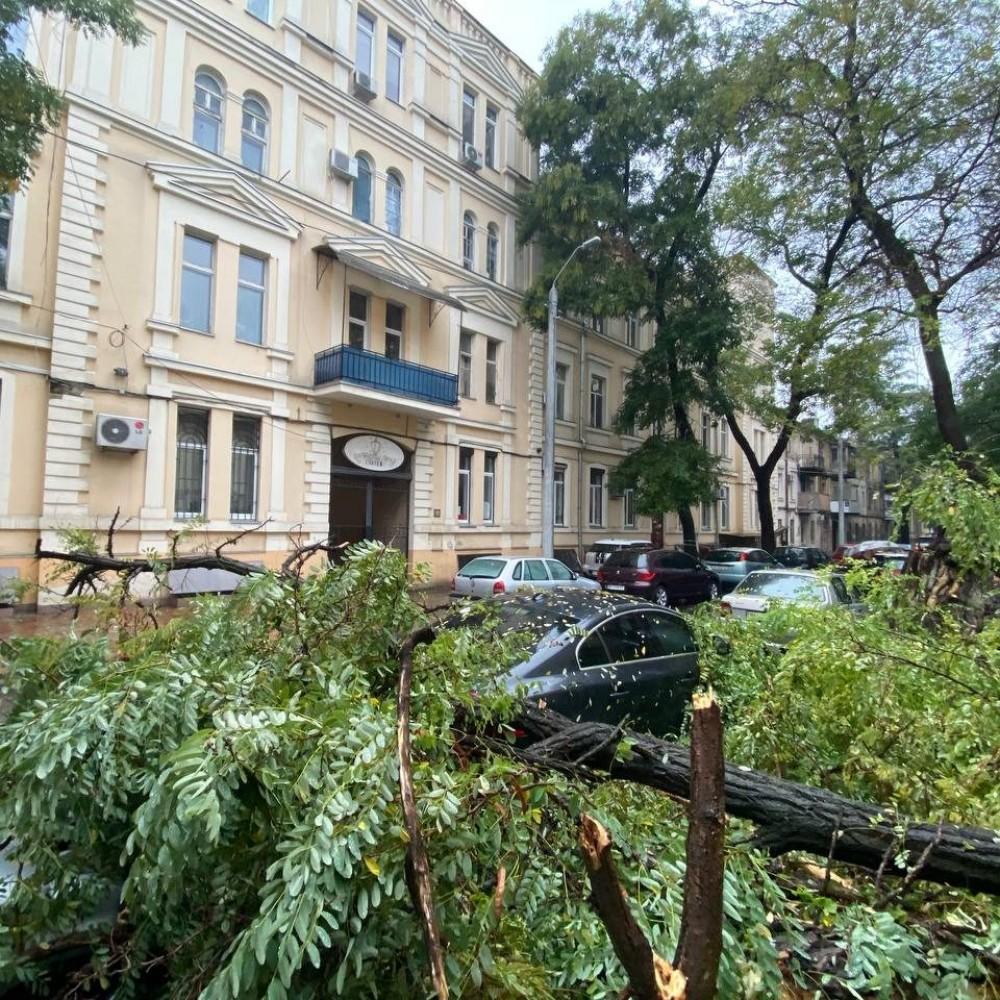 На Юрия Олеши рухнуло огромное дерево // Никто не пострадал